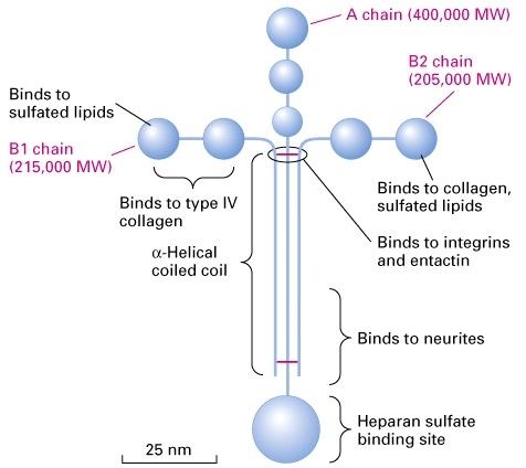 细胞的基本结构知识框图